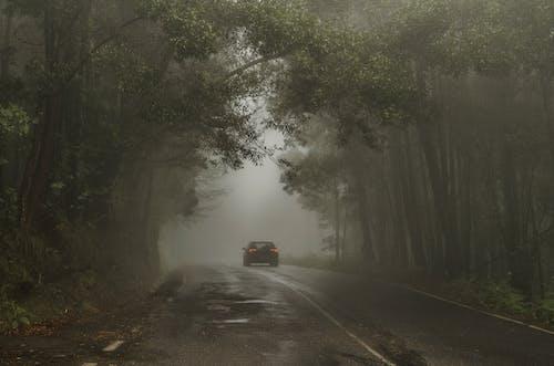 Mobil Melintas Di Jalan Antar Pohon