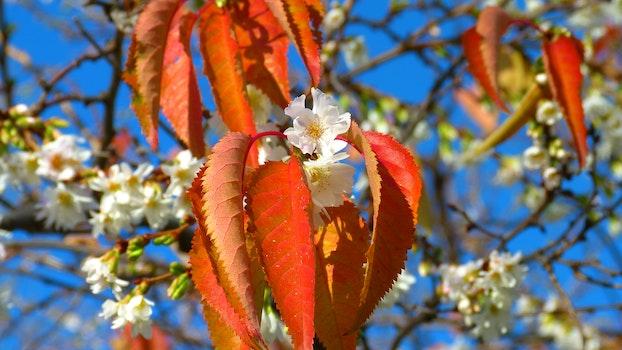 Orange Leaf Beside White Flower