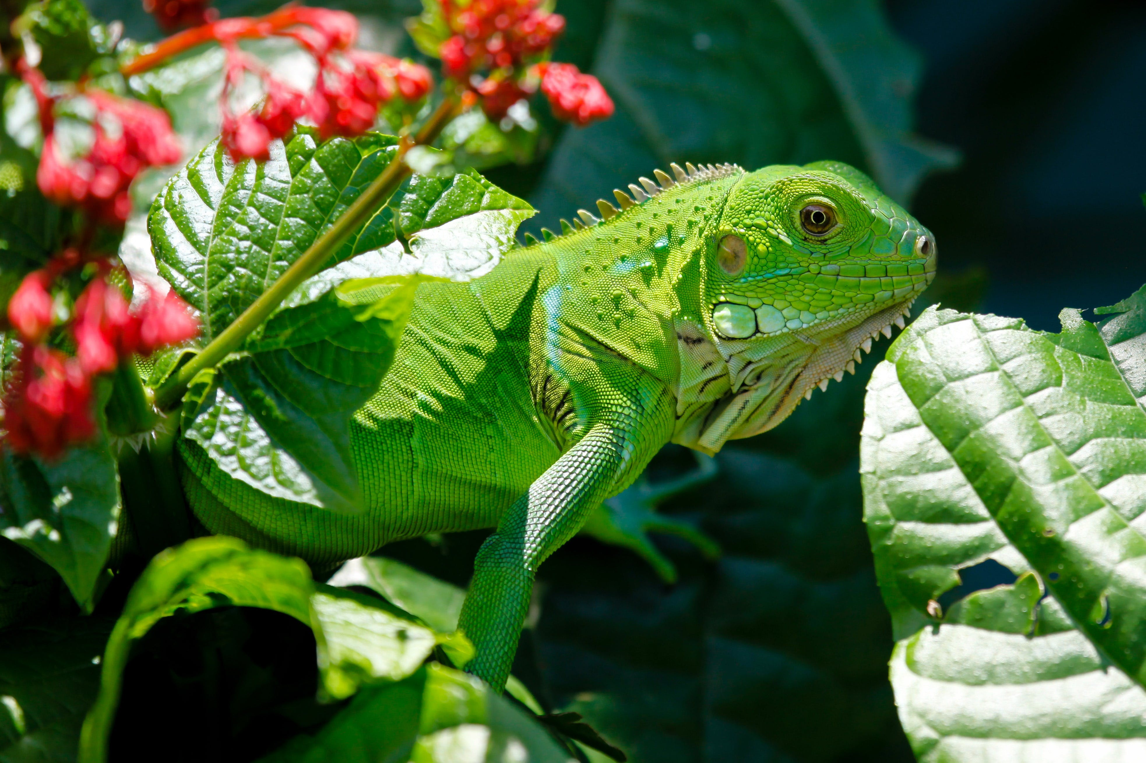Green Reptile on Red and Green Leaves