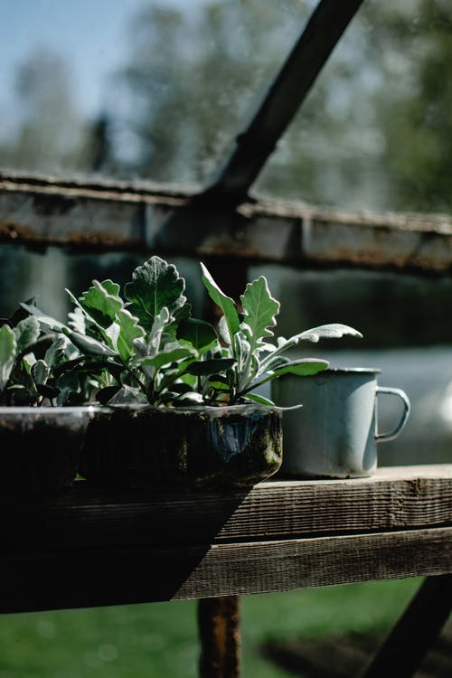 Potted Plant On A Wooden Bench