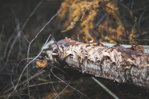 Fotos de stock gratuitas de árbol, bañador, bosque, dañado