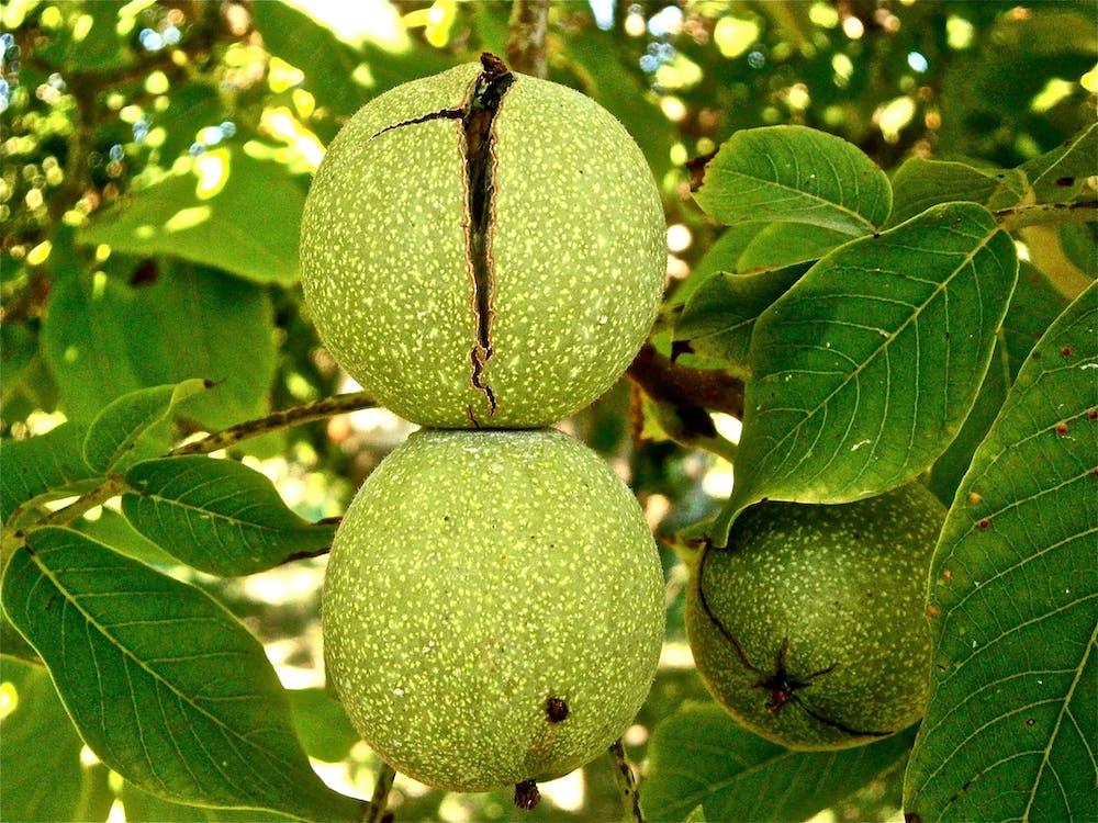 drzewo, natura, owoc