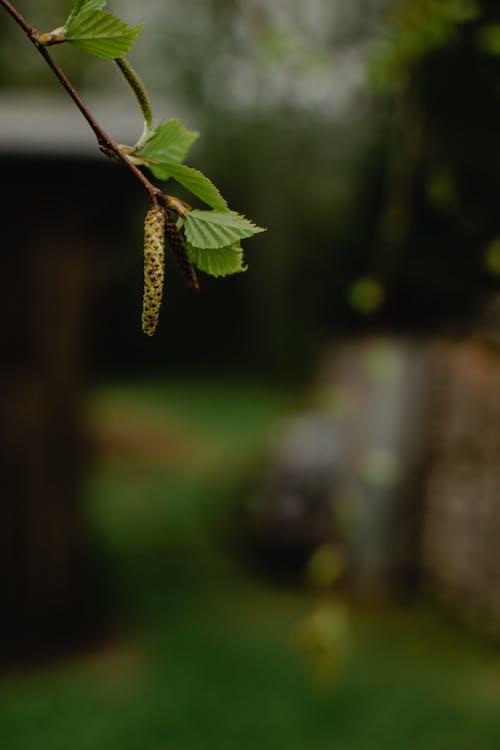 Green Leaf Plant in Tilt Shift Lens