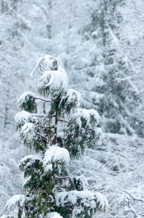 White Snowman on Snow Covered Tree