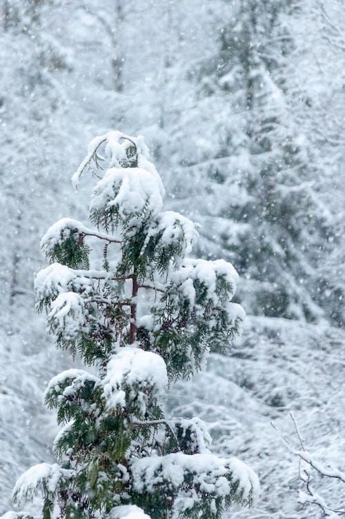 Kostnadsfri bild av frost, frostig, frostigt väder
