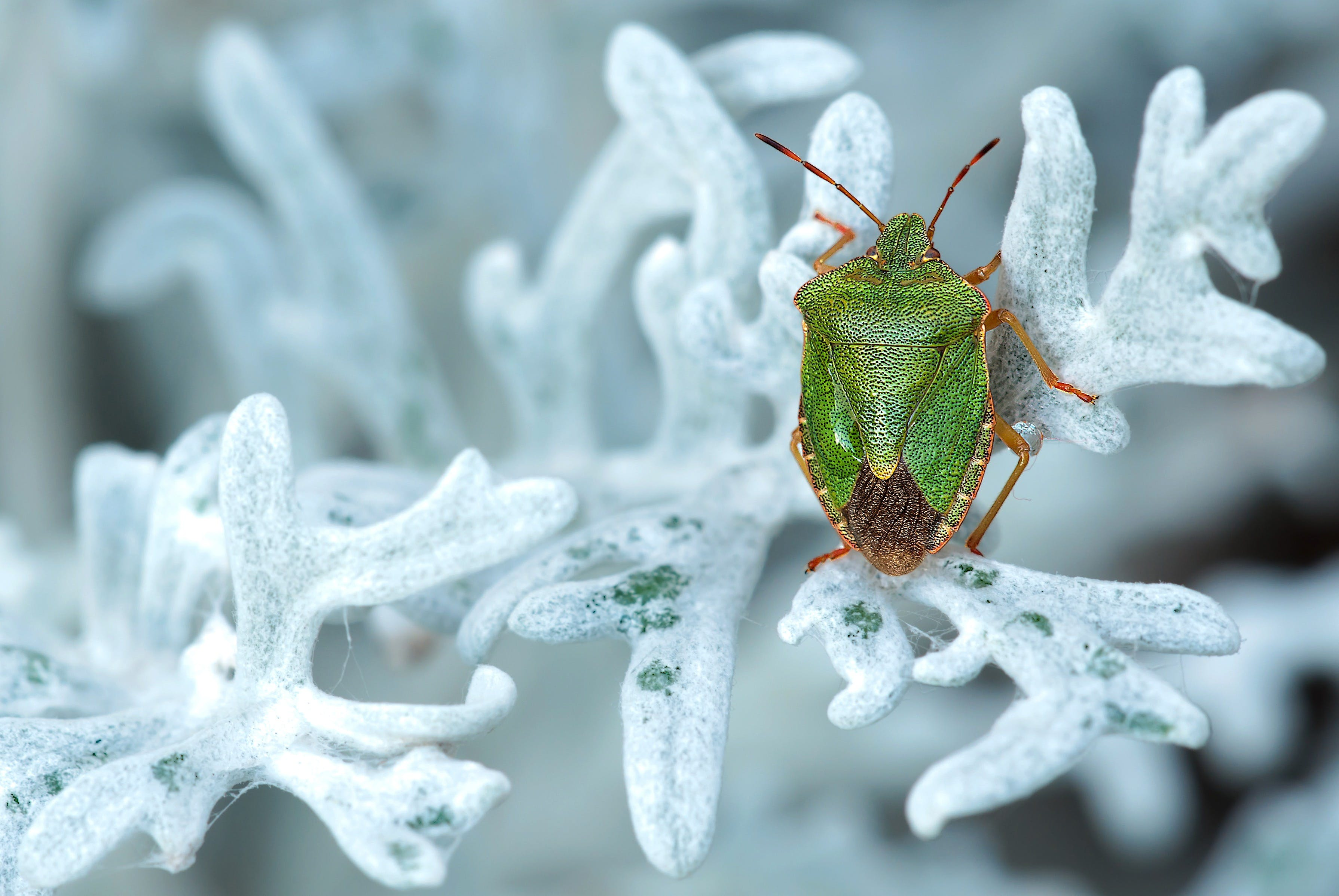 Green and Brown Bug on White Leaf