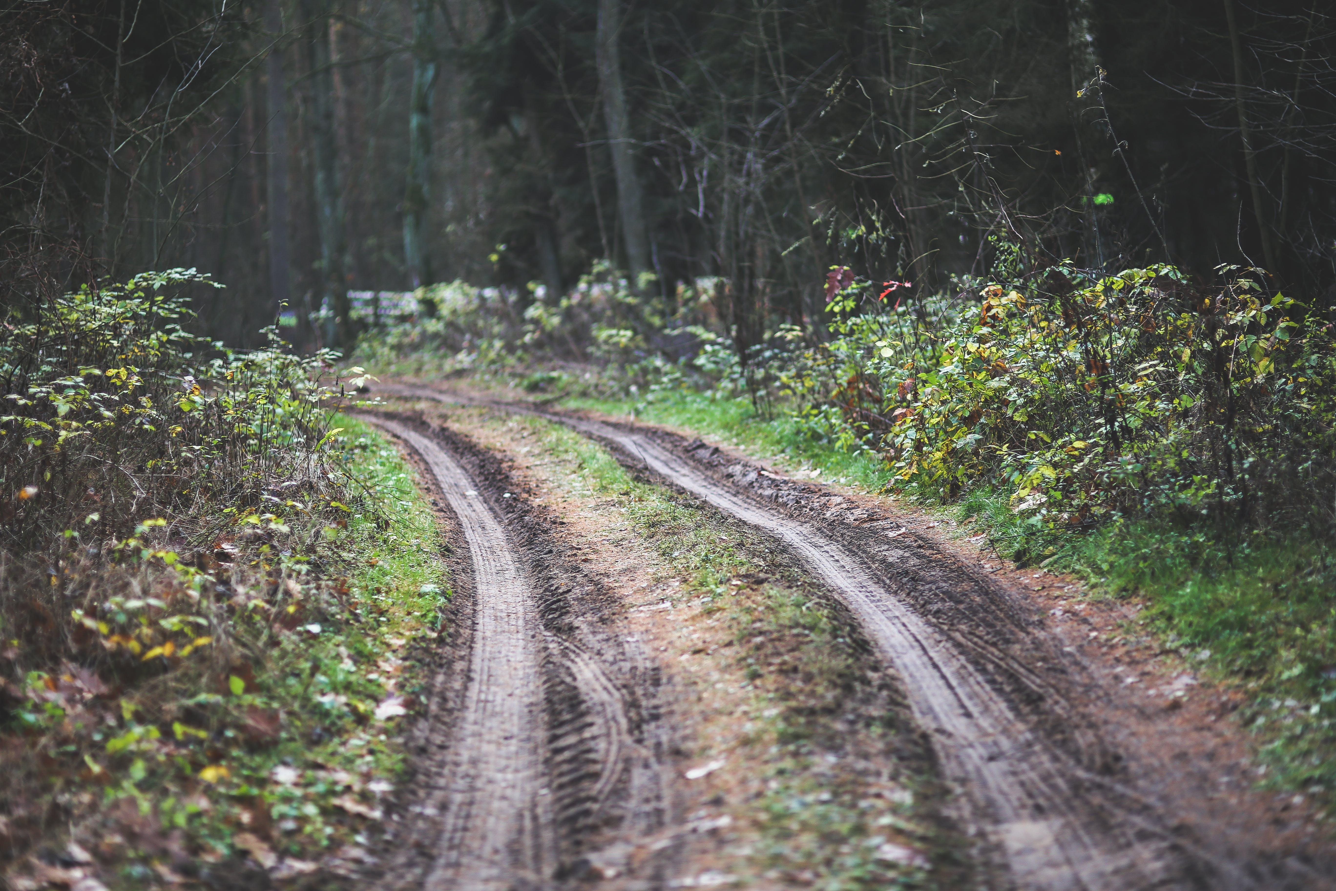 길, 나무, 더러운, 방향의 무료 스톡 사진