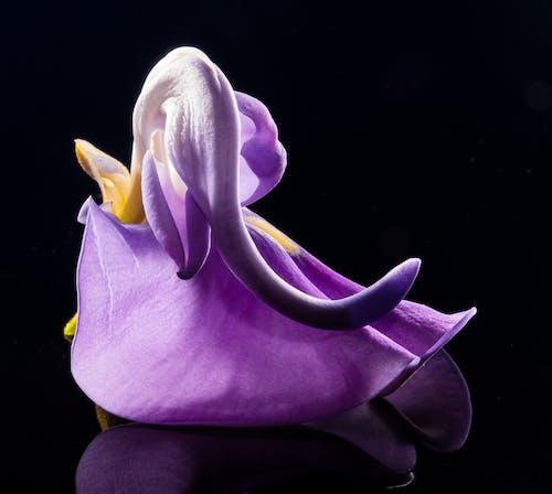 Foto d'estoc gratuïta de flor, florir, morat, natura