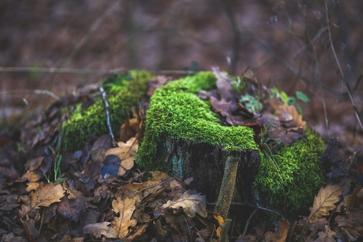 Moss covered tree trunk surrounded by fallen leaves