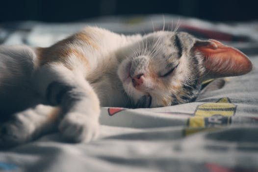 White Orange and Gray Tabby Cat Lying on Gray Textile