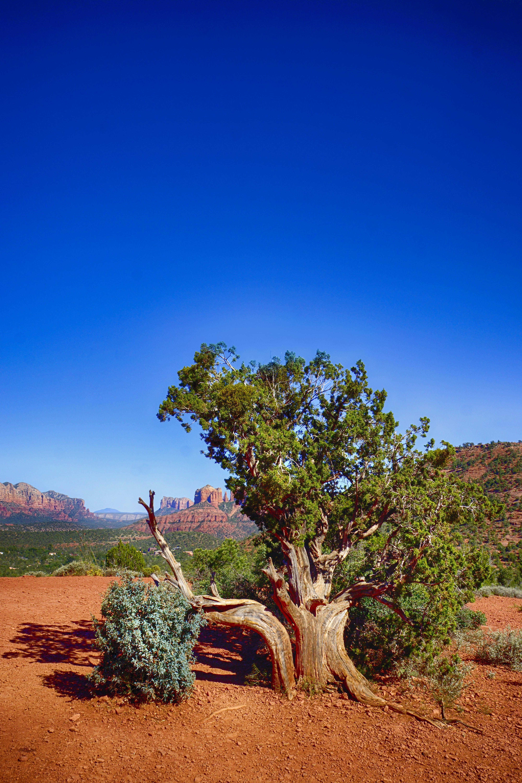 Green Tree Near Mountain