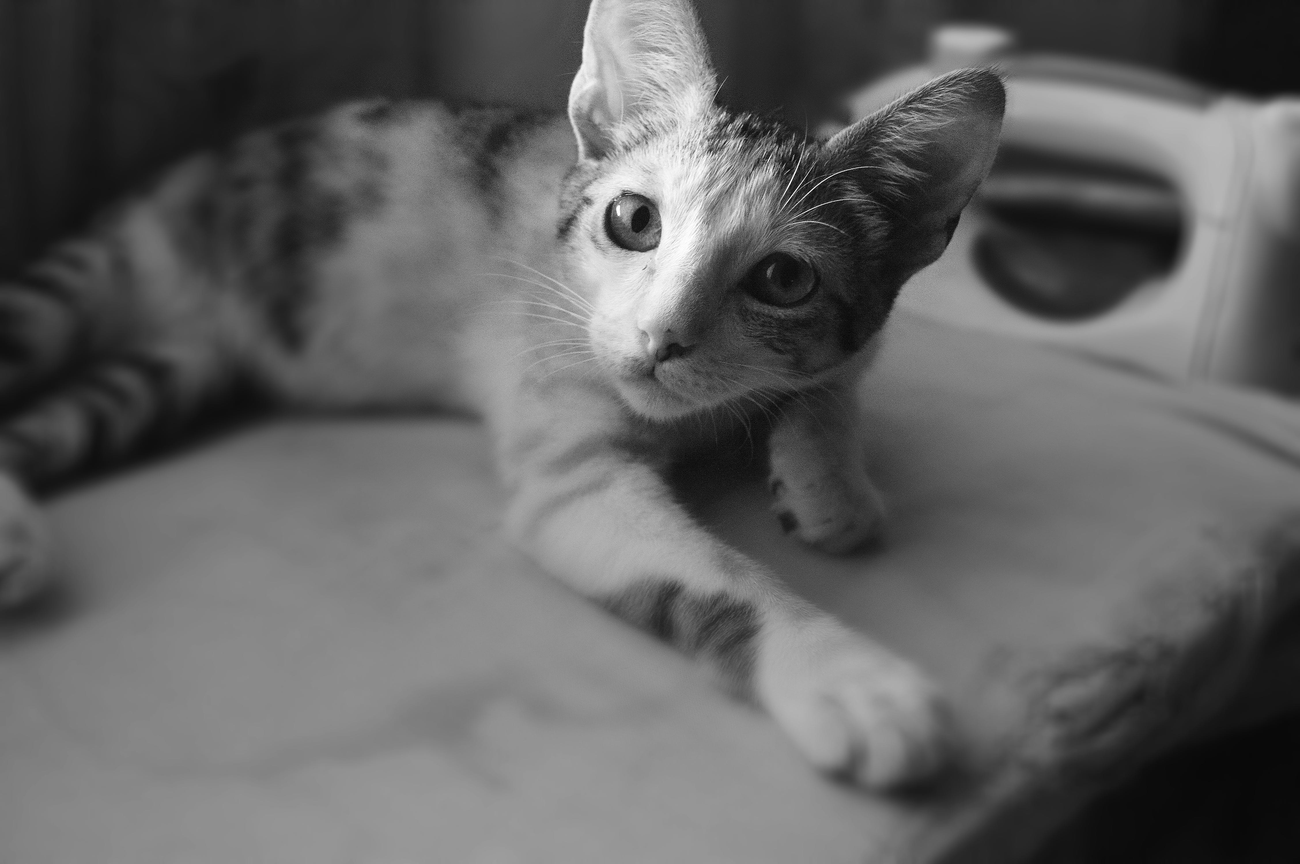 Black and White Photo of Cat
