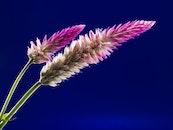 nature, flowers, bloom