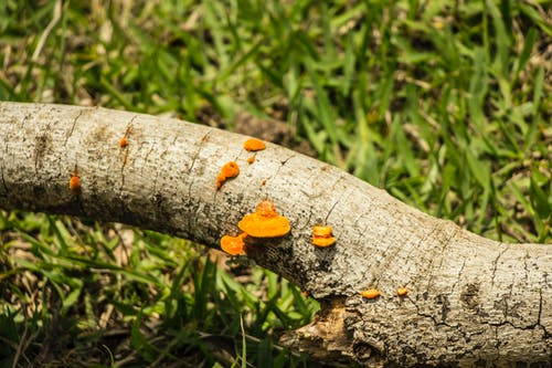 Ảnh lưu trữ miễn phí về Boletus, nấm, ngọn cỏ