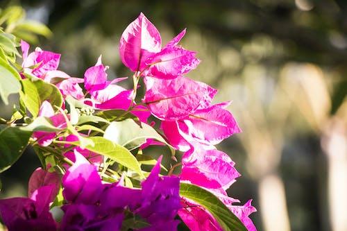 Ảnh lưu trữ miễn phí về giường hoa, những bông hoa đẹp, nở hoa