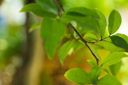 Ảnh lưu trữ miễn phí về Cây xanh, lá, màu xanh lá