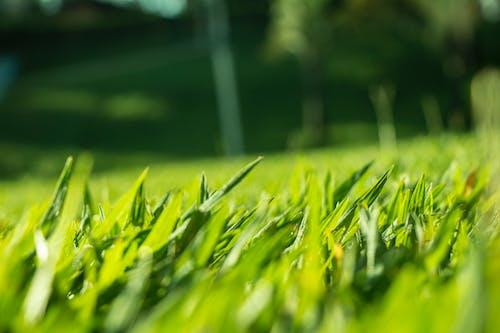 Ảnh lưu trữ miễn phí về màu xanh lá, ngọn cỏ, sân cỏ