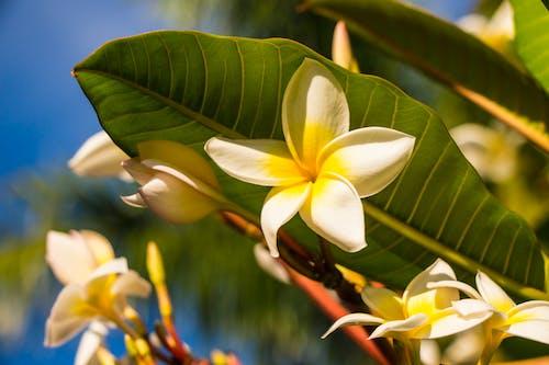 Ảnh lưu trữ miễn phí về cây nở hoa, lá xanh, môi trường