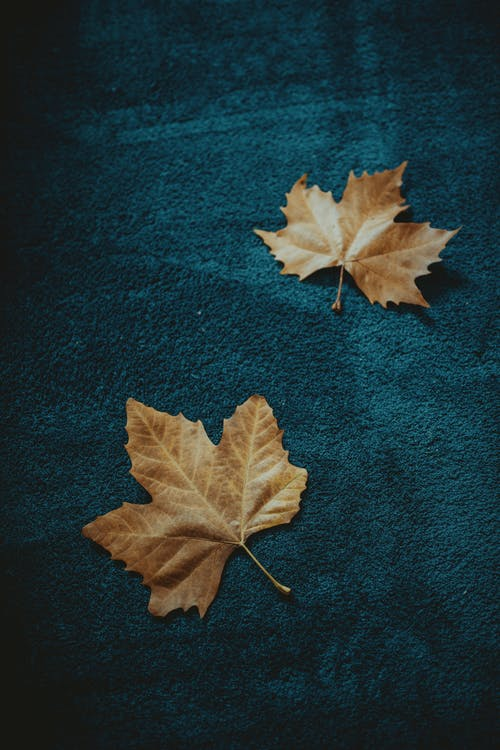 Brown Maple Leaf on Blue Textile