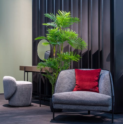 Potted plant in stylish room with comfortable furniture