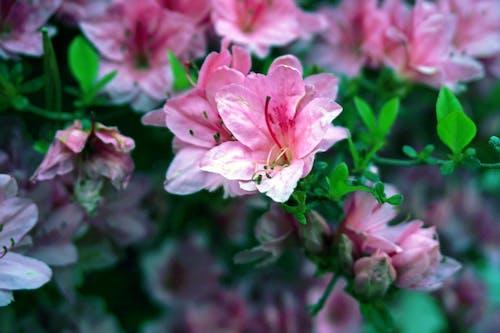 Free stock photo of beautiful, beautiful flowers, bloom, blooming