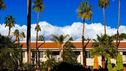 Безкоштовне стокове фото на тему «архітектура, готель, дерева, кокосові пальми»