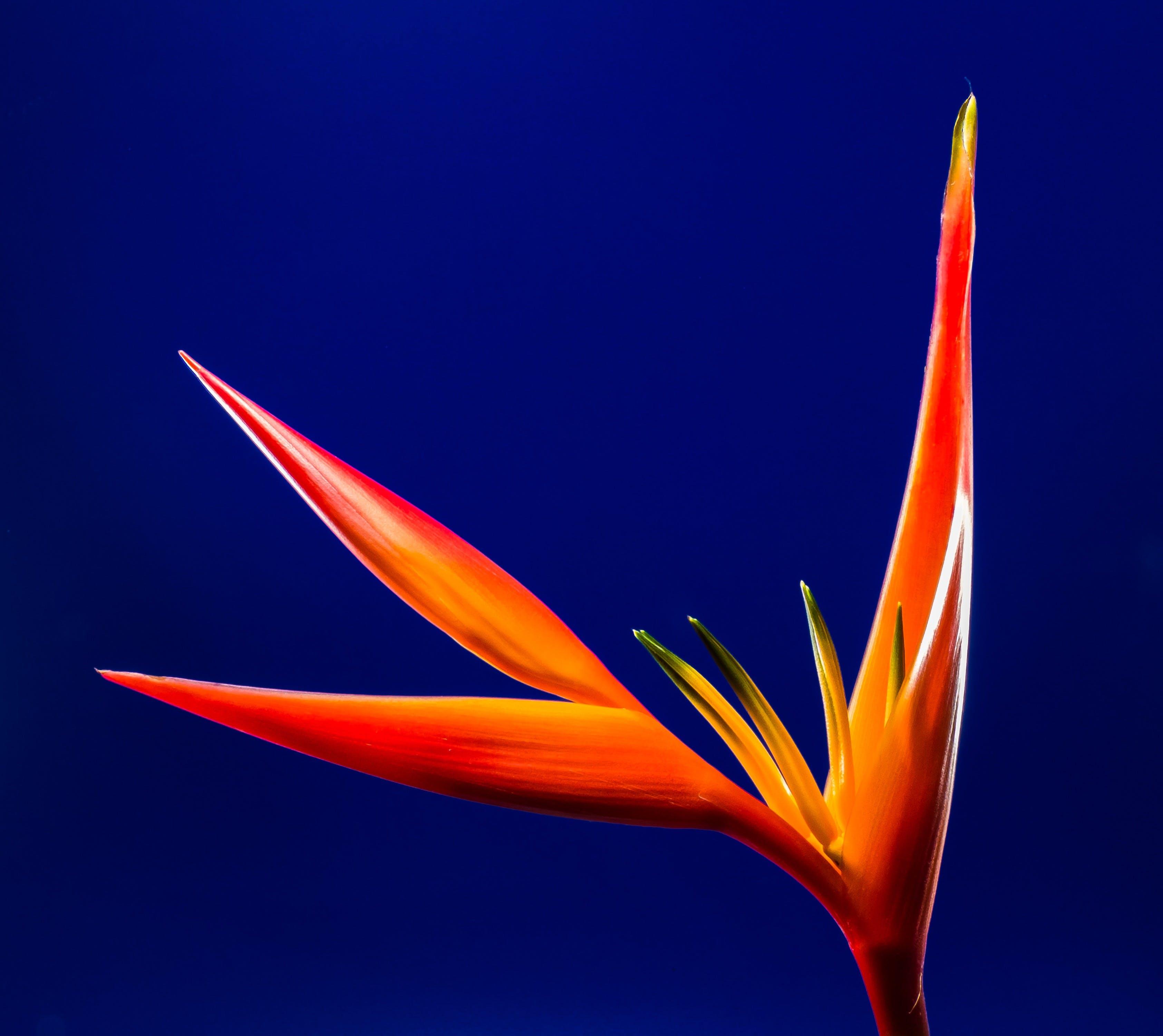 Darmowe zdjęcie z galerii z jaskrawy, kwiat, kwitnąć, makro