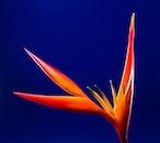plant, orange, flower