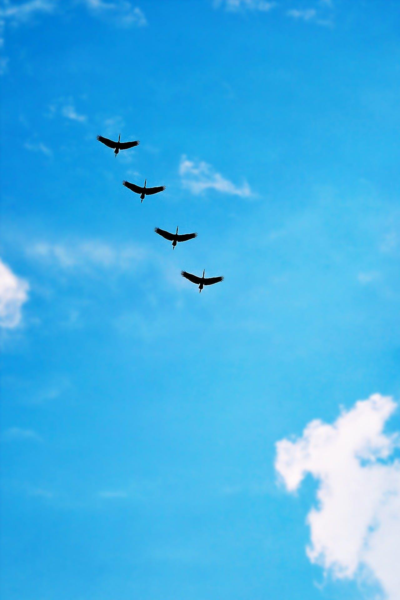 Black Bird Under Blue Calm Sky during Daytime