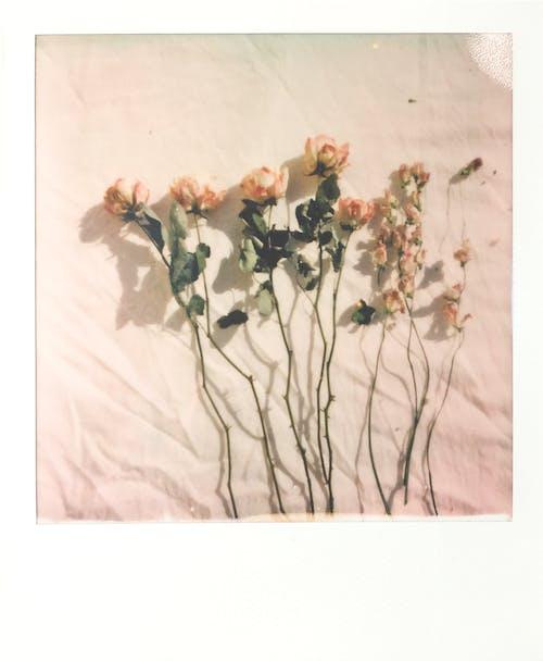 Gratis arkivbilde med blad, blomst, blomstre