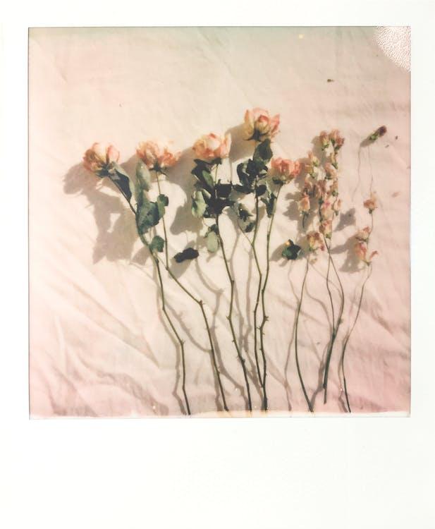 afyon, anlık film, anlık fotoğraf içeren Ücretsiz stok fotoğraf