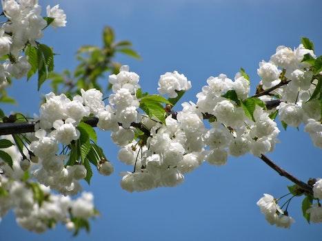 White Petal Flower in Macro Photography