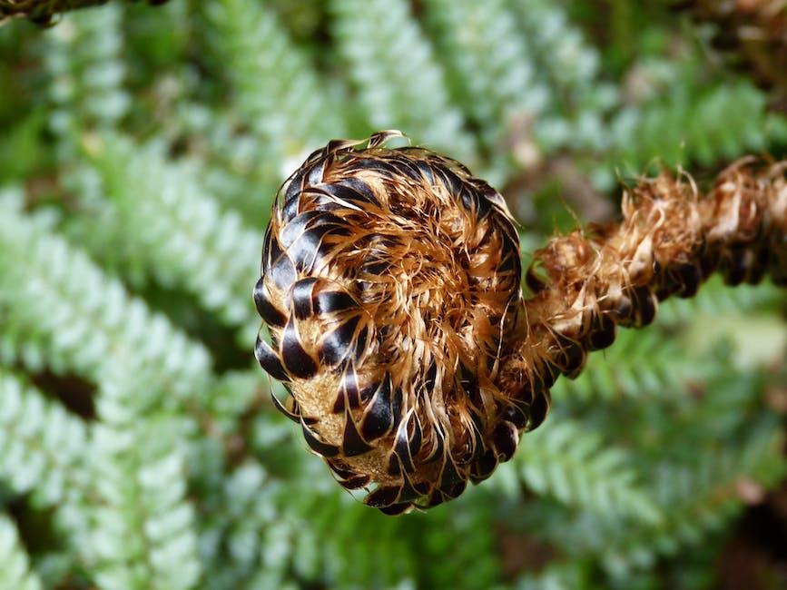 New free stock photo of nature, plant, macro