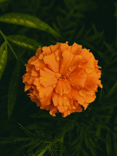 A Close-Up Shot of an Orange Flower