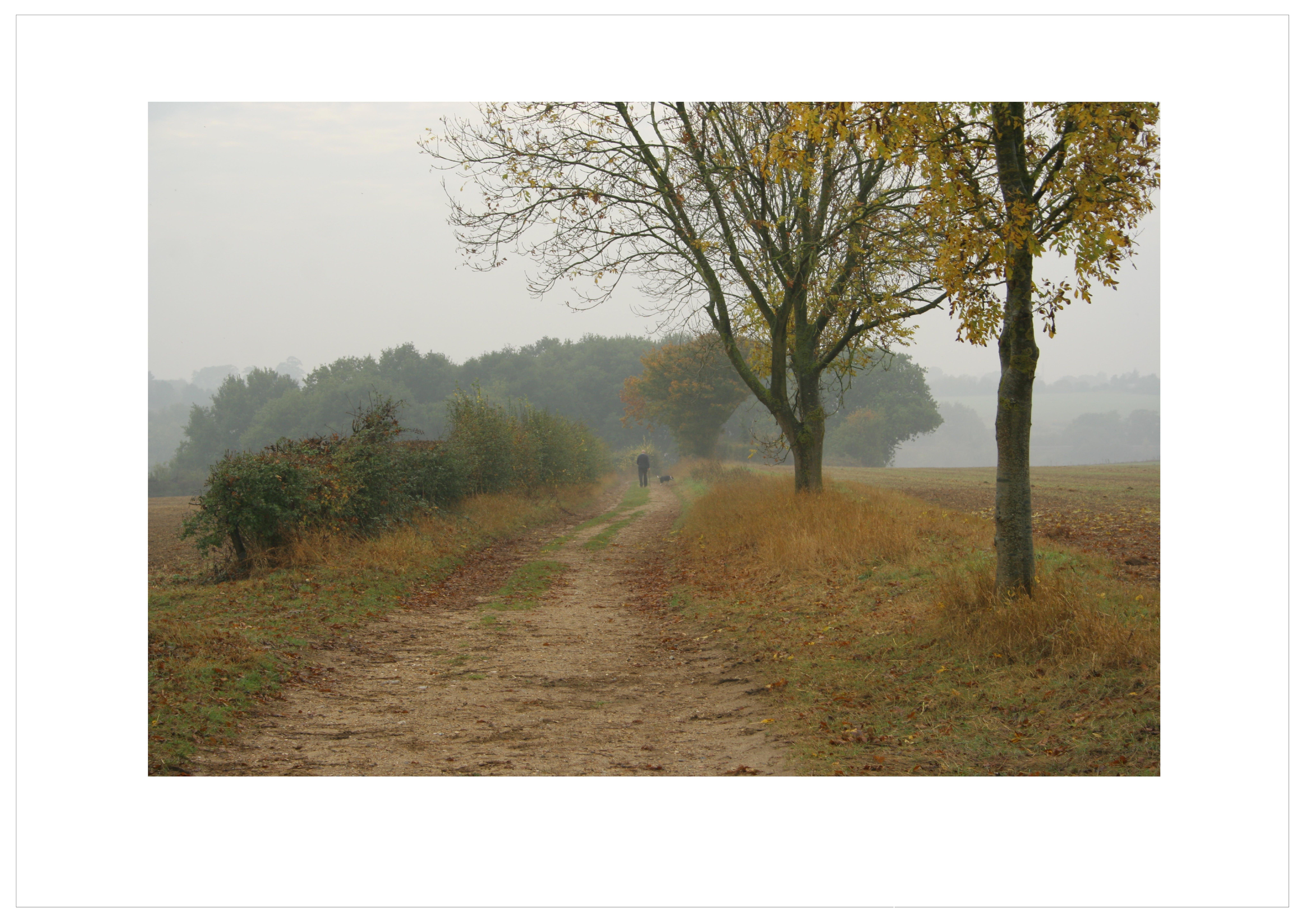 Základová fotografie zdarma na téma barvy podzimu, hloubka ostrosti, krajina, pohoda