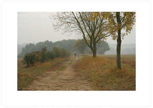 Foto profissional grátis de árvores, calmaria, cerca viva, cores do outono
