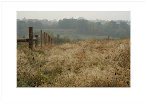 Foto profissional grátis de castanho, cerca de arame, cores suaves, ecológico