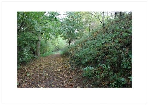 Foto profissional grátis de banco, caminho, colina, ecológico