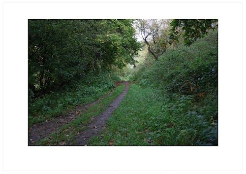 Foto profissional grátis de caminho, ecológico, enevoado, paisagem