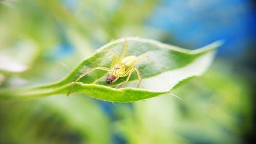 Darmowe zdjęcie z galerii z kamuflaż, makro, natura, owad