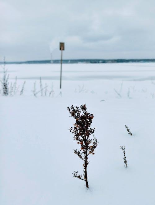 Ilmainen kuvapankkikuva tunnisteilla flunssa, jää, jäätynyt