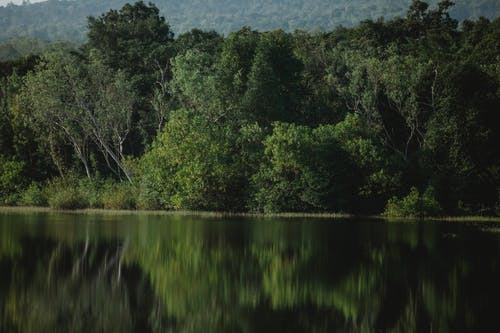 Picturesque view of forest with high green trees and bushes reflecting in pure lake in daytime