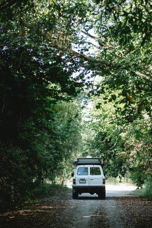 Car driving on road among green trees in countryside