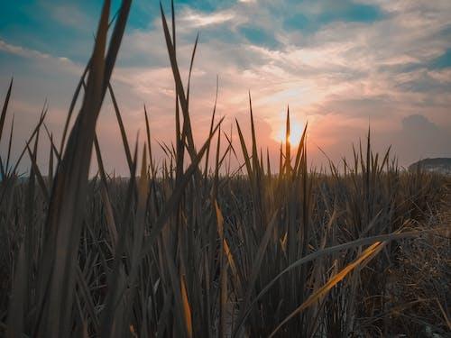 Photos gratuites de beau ciel, beau coucher de soleil, ciel bleu