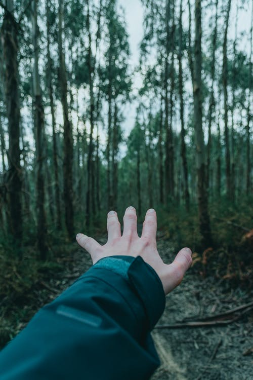Crop unrecognizable traveler in warm clothes reaching out hand while standing in wild forest on cloudy day