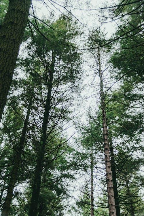 Grüne Bäume Unter Weißem Himmel