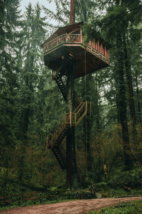 From below of small wooden house with terrace ans staircase built on tall tree growing in lush coniferous forest