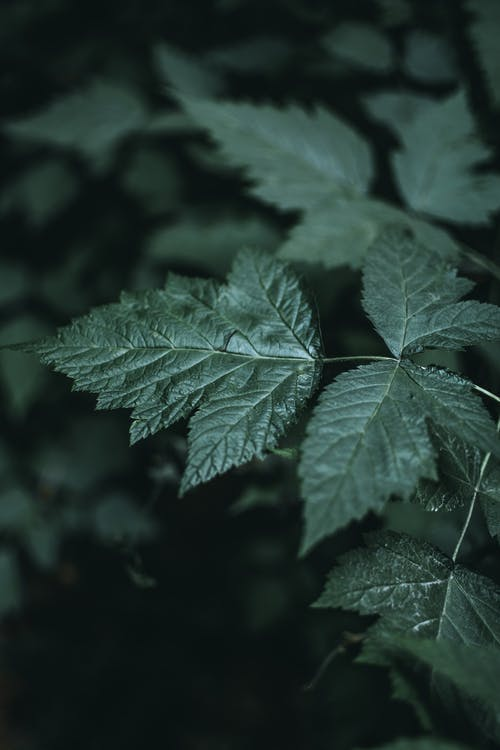 Dark green plant leaves in nature