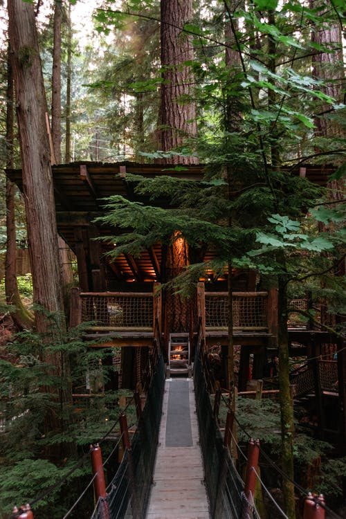 Small wooden tree house with burning electrical lights and narrow footbridge in lush abundant woodland