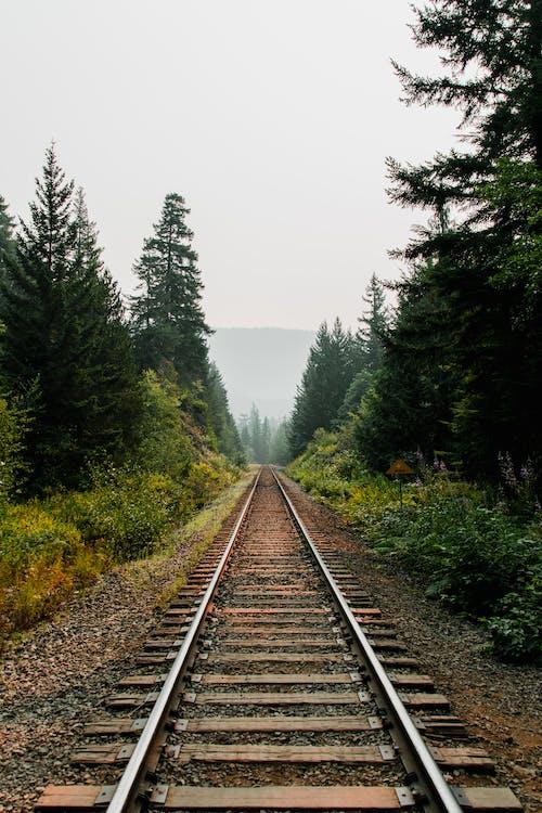 Rural railway running through verdant green forest